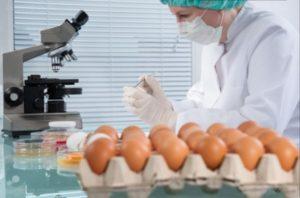 проверка яйц