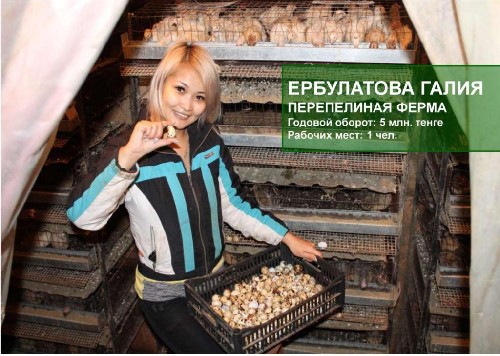 ферма по перепелийным яйцам