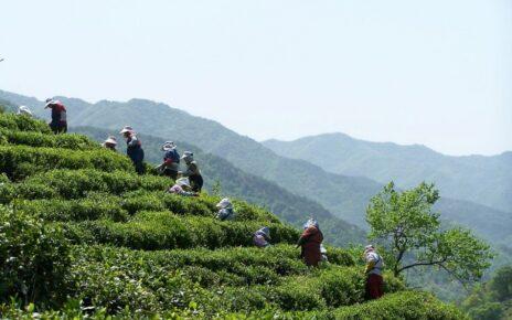 чай в Корее