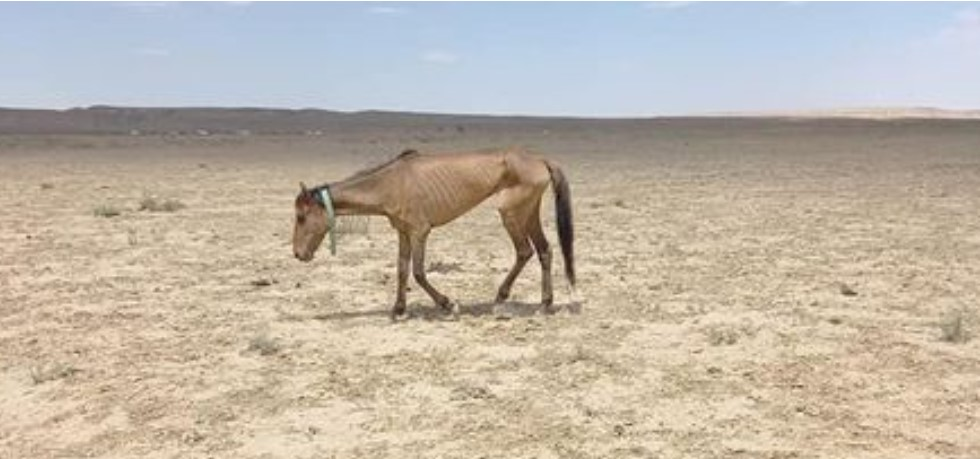 худая лошадь