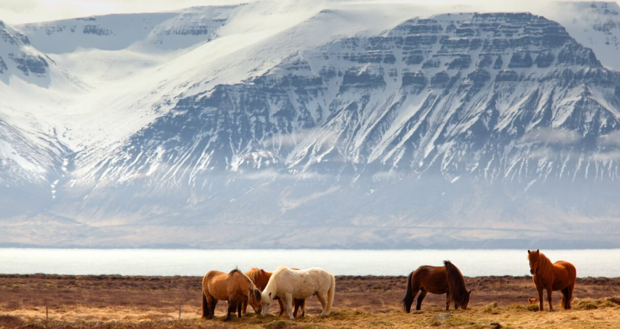 коневодство и породы лошадей